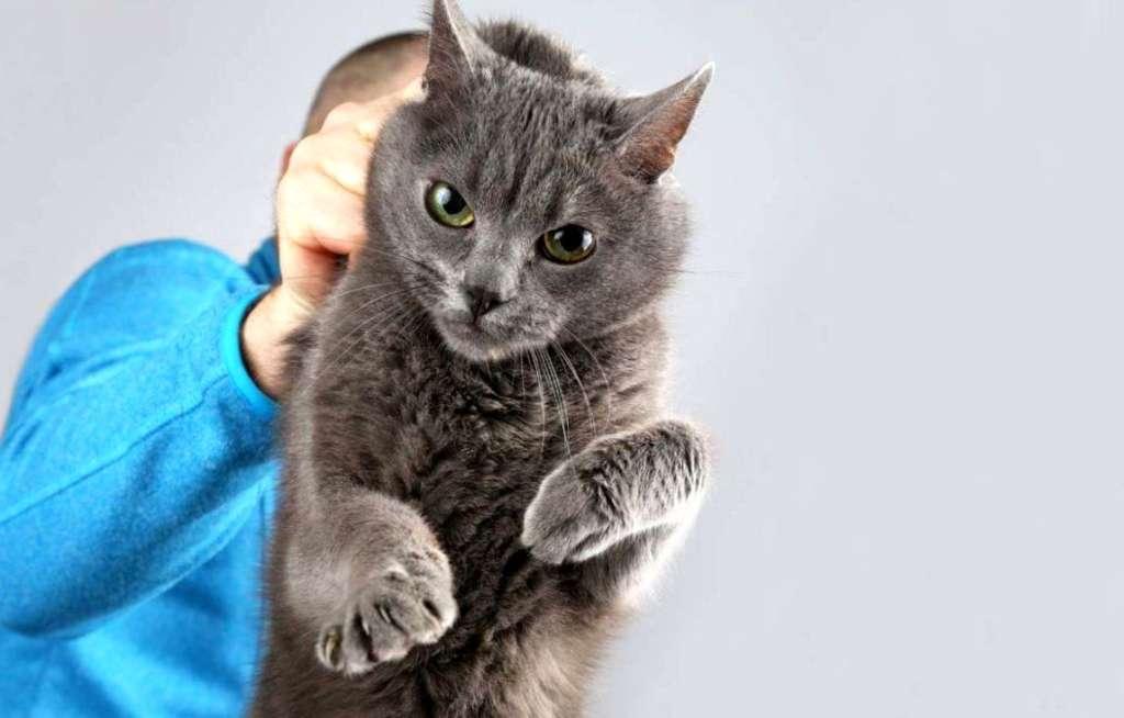 Znalezione obrazy dla zapytania: наказание для кошки