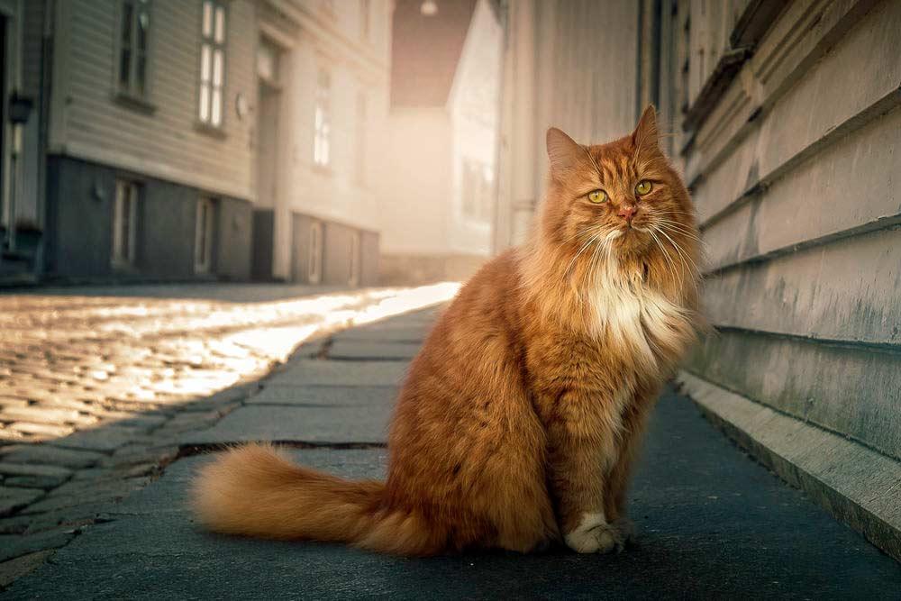Znalezione obrazy dla zapytania: кошка найдет дорогу домой