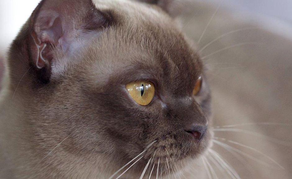 Шепот Звезд: какая кошка подходит вам по Знаку Зодиака? ЧАСТЬ 2