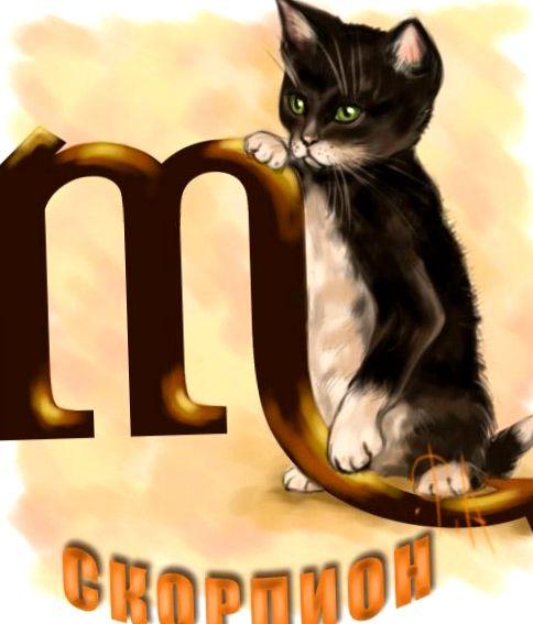 Znalezione obrazy dla zapytania: кот-скорпион