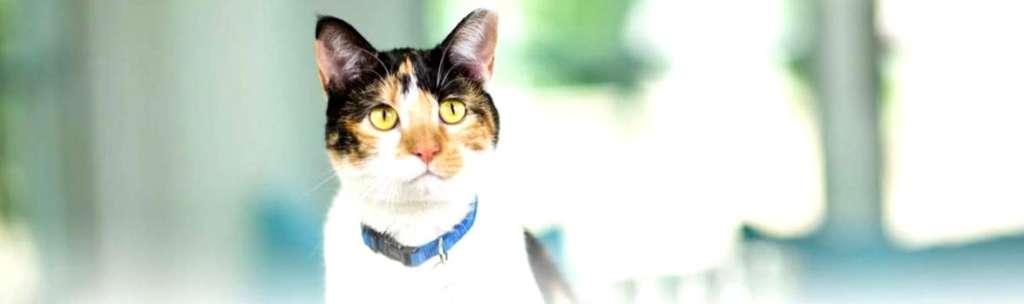 Znalezione obrazy dla zapytania: Все, чего вы не знали о дрессировке кошек Все, чего вы не знали о дрессировке кошек Все, чего вы не знали о дрессировке кошек