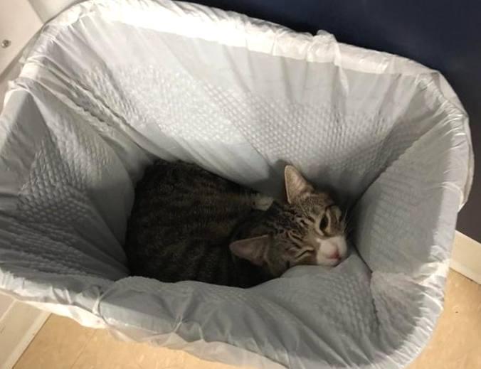 Znalezione obrazy dla zapytania: кошка в мусорном ведре спит