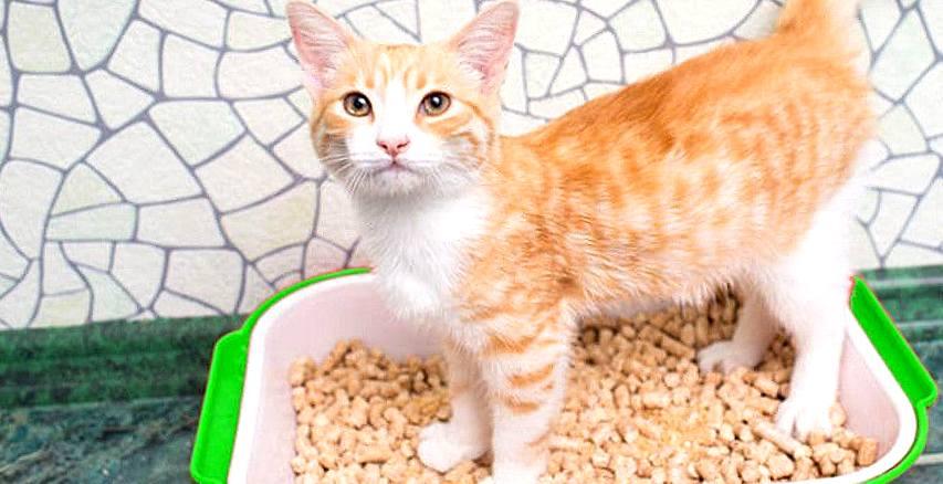 Znalezione obrazy dla zapytania: Запахи кошки: на что стоит обратить внимание и как от них избавиться