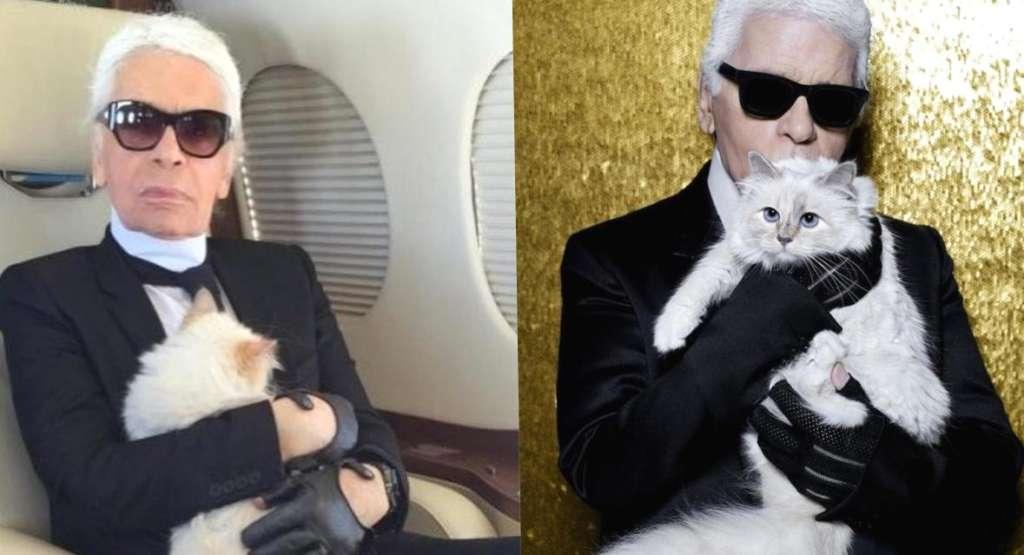 """Znalezione obrazy dla zapytania: Шупетт, кошка Карла Лагерфельда"""""""