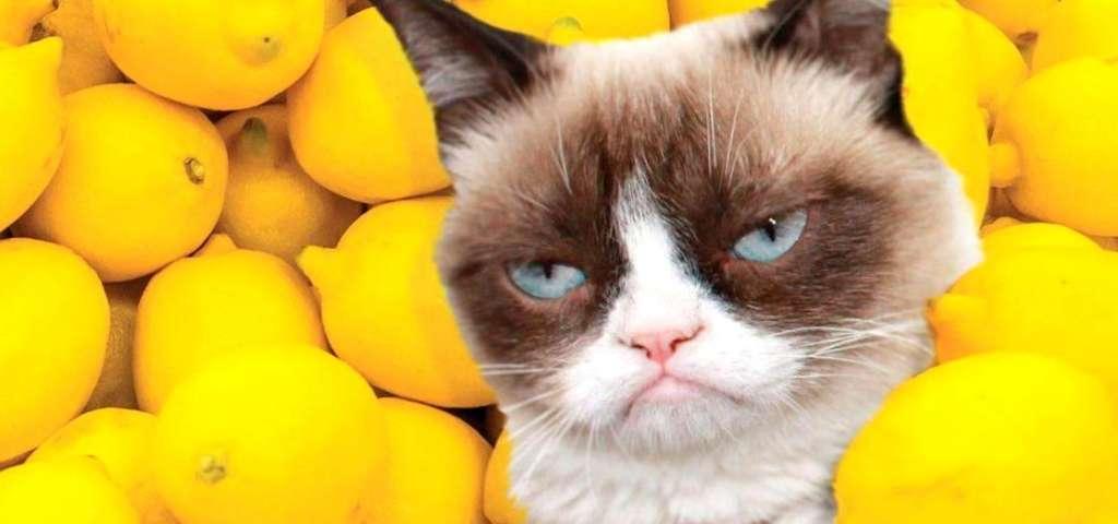 "Картинки по запросу ""Какие запахи отпугивают кошек?"""""