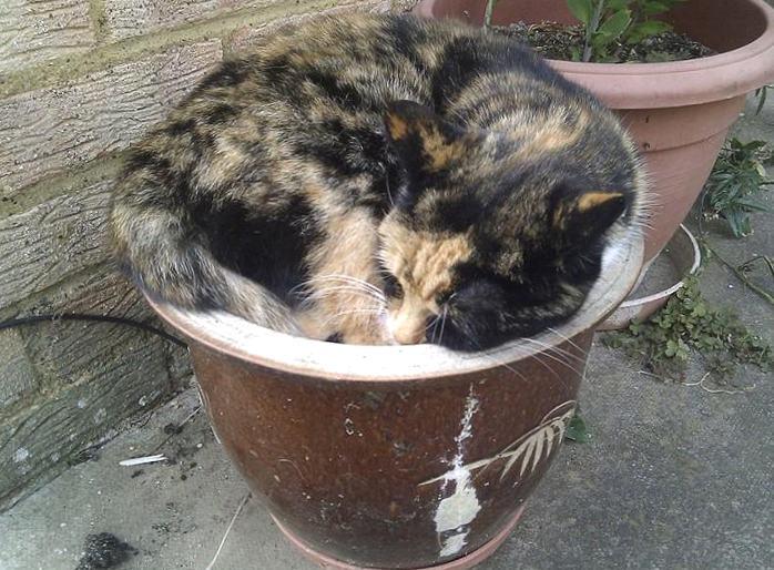 Кошки, спящие в странных местах