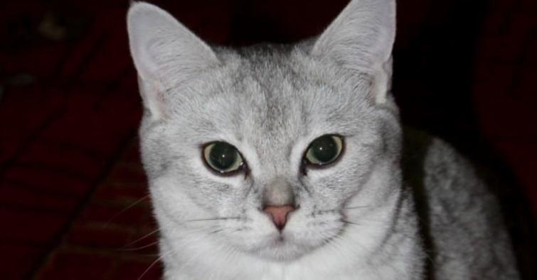 Znalezione obrazy dla zapytania: Мурчащий гороскоп: характер кошки по дате рождения ЧАСТЬ 1