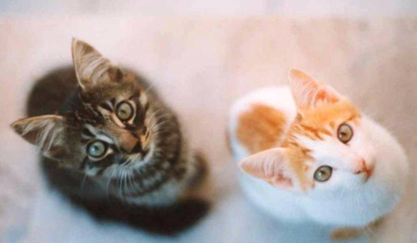 Znalezione obrazy dla zapytania: предназначение кошки по времени года