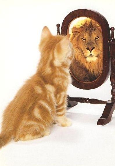Znalezione obrazy dla zapytania: кот-лев