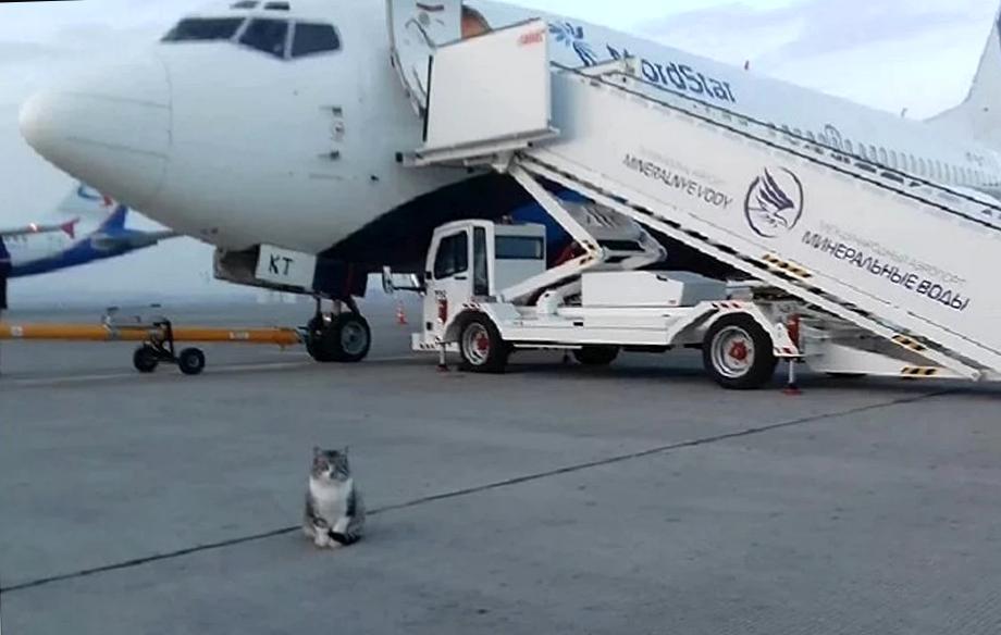 """Картинки по запросу """"Кот Басик: талисман аэропорта в Ставрополе"""""""""""