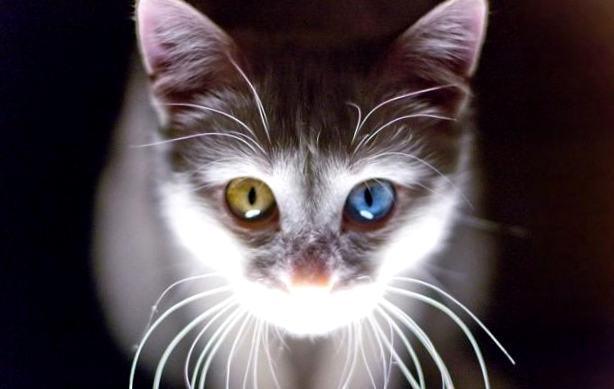 Znalezione obrazy dla zapytania: как цвет шерсти влияет на магическую силу вашей кошки