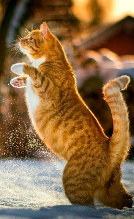 Znalezione obrazy dla zapytania: кот по времени года