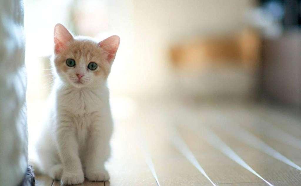 Запахи кошки: на что стоит обратить внимание и как от них избавиться
