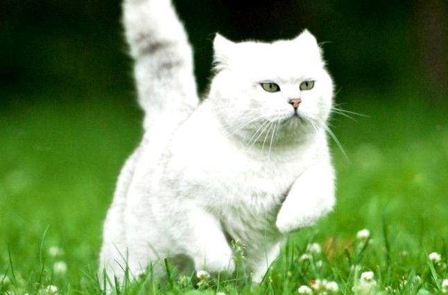 Znalezione obrazy dla zapytania: Мурчащий гороскоп: характер кошки по дате рождения ЧАСТЬ 2