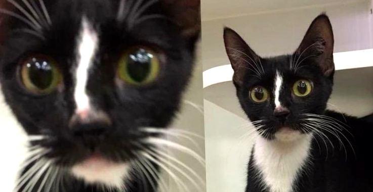 Кошка с самыми длинными лапами в мире: «топ – модель» Квенда из Австралии