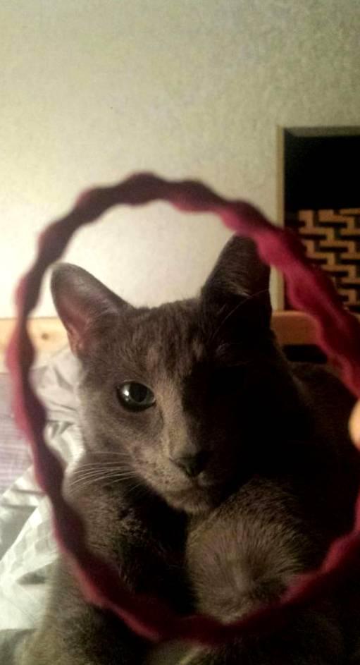 Жизнь замечательного кота Айкиса: веселая фотоподборка