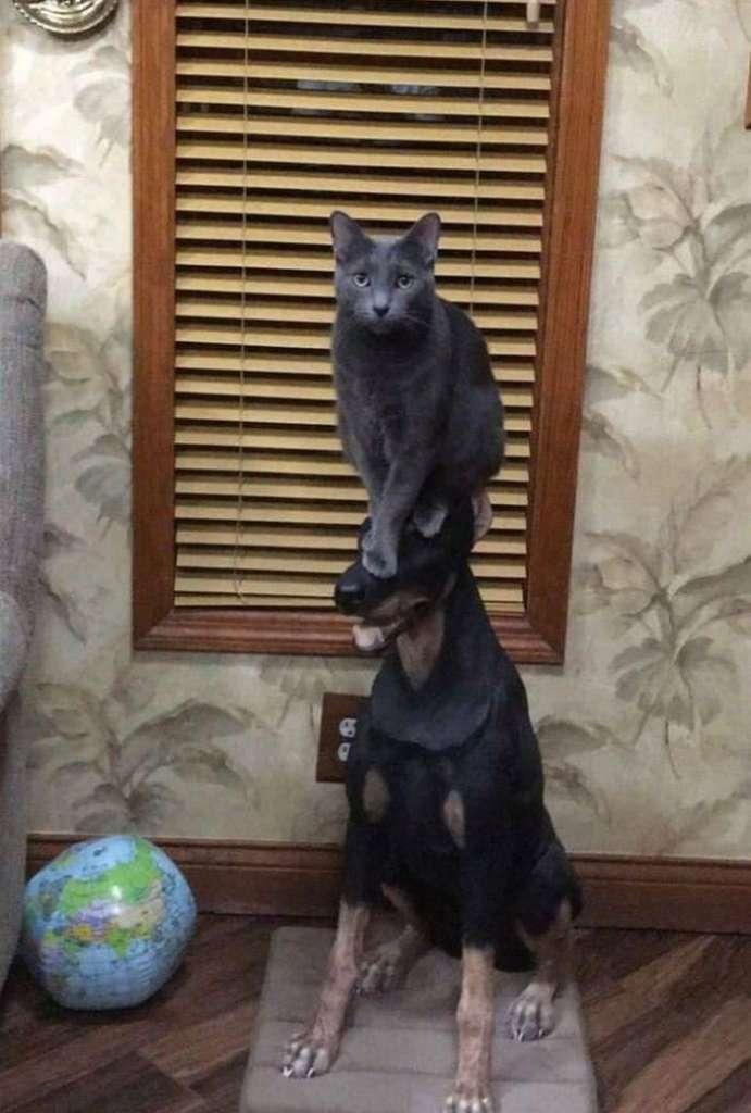 Фотоподборка «на пятерочку»: как кошка с собакой или дружбе быть!