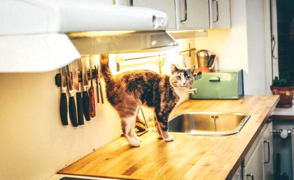 Мебель для вашей кошки: готовим дом к появлению питомца