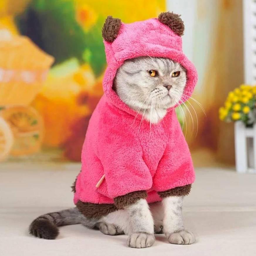 Модники и модницы: подбираем одежду для котиков
