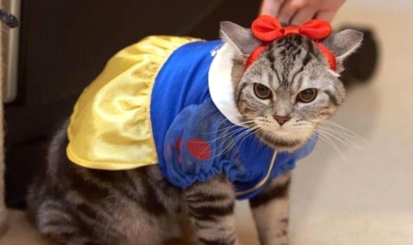 Кото – суши, пираты и Белоснежки: вторая умилительная фотоподборка с котиками в смешных костюмах