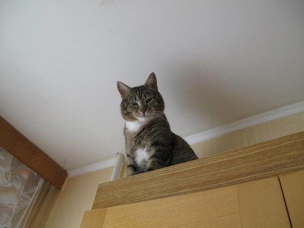 Интриги в шкафу или «платяной» кот: веселая фотоподборка наших котэ на ваших полочках