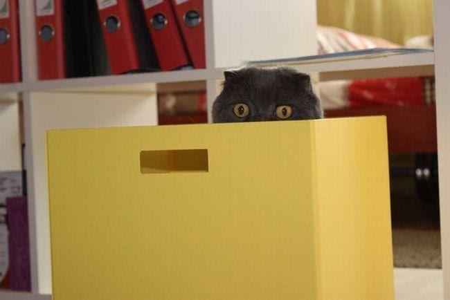 Веселая фотоподборка «Я иду искать!» или как коты с нами в прятки играли