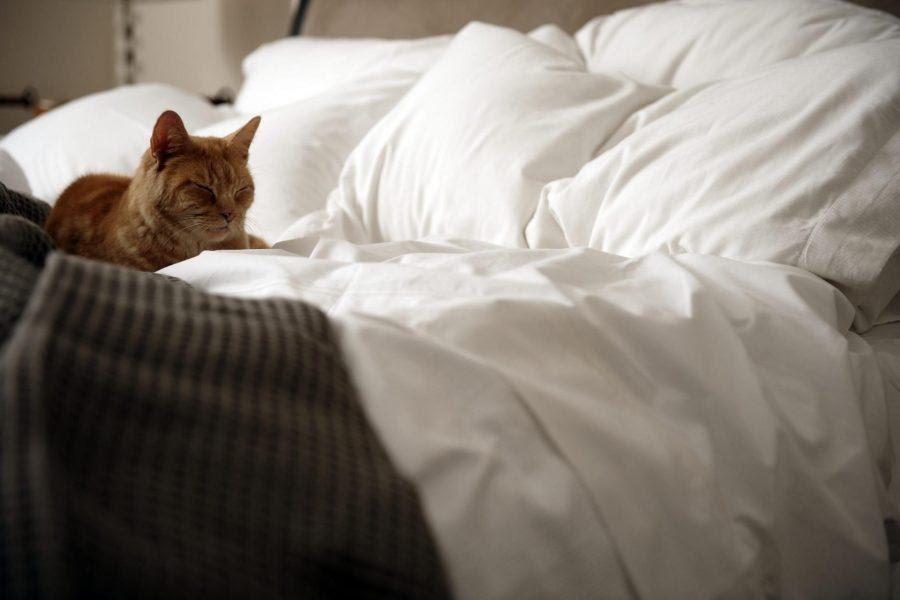 Кошачьи «потягуси»: подвинься, хозяин, я лягу. Фотоподорка котиков, которые нежатся в кровати хозяина