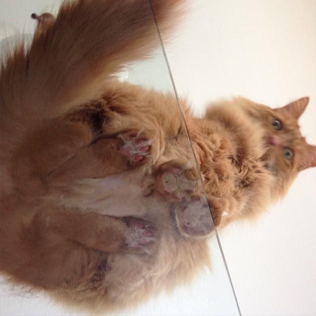 Кошки-на-стекле16.jpg