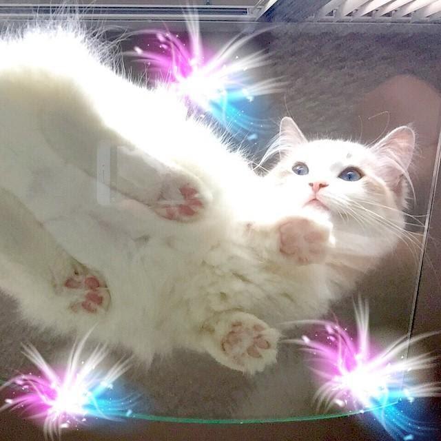 Кошки-на-стекле5.jpg