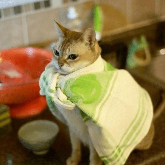 Котэ в полотенце: эх, хорошо после душа! Фотоподборка смешных питомцев