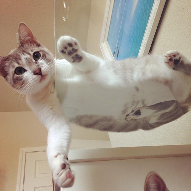Кошки-на-стекле7.jpg