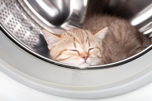 depositphotos_10624808-stock-photo-sleeping-kitten-lying-inside-laundry.jpg