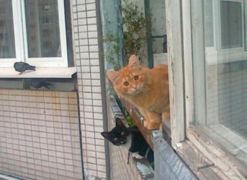 Греемся на солнышке и заводим мартовский роман: котики на балконе и подоконнике. Фотоподорка