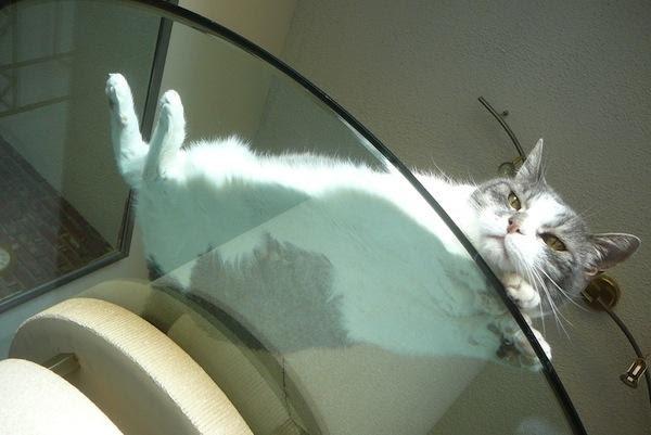 1321537322_cats-7.jpg