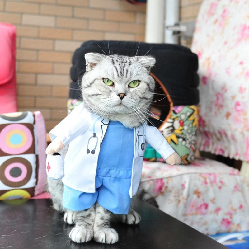 Супергерои, эльфы, убийцы и врачи: котики в смешных и нелепых костюмах. Фотоподборка