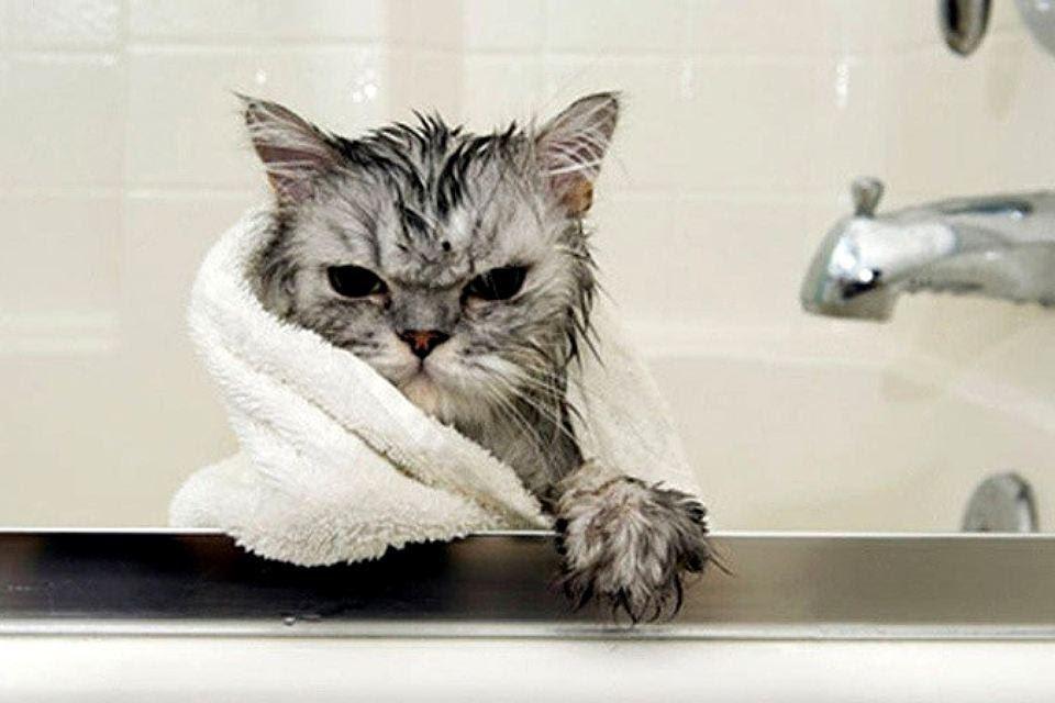 Фотоподборка невероятно смешных и милых котиков в ванной: надевайте шапочку, мы плывем!