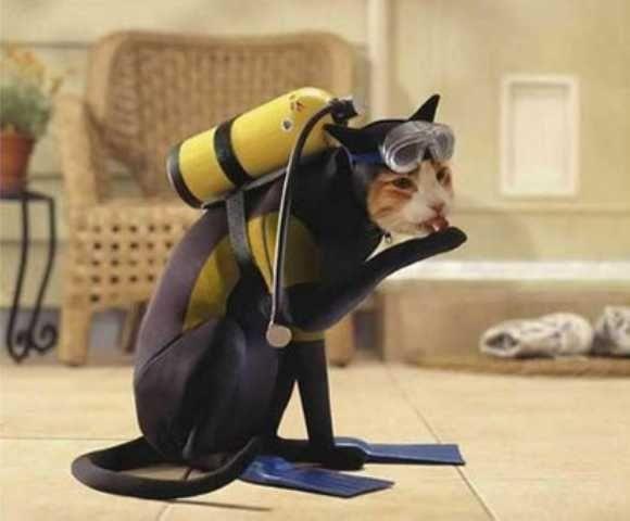 cat-diver-costume.jpg