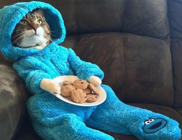 Котэ в пижамах: и снова умилительная фотоподборка любимчиков, на этот раз – готовящихся ко сну