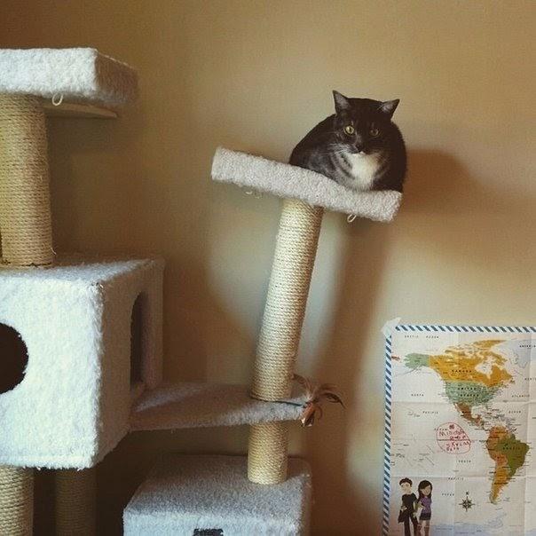 Фотоподборка просто обхохочешься или еще больше смешных котов