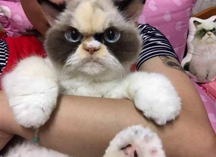 Забавные кошачьи мордашки: кто тут самый смешной малыш? Фотоподборка.