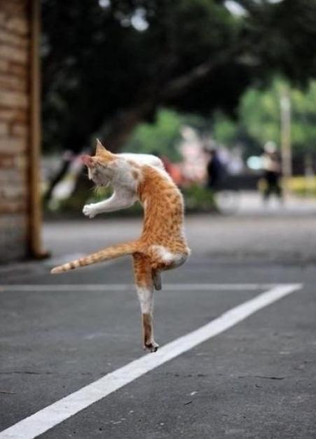 Жги подошву, рви танцпол: умопомрачительная фотоподборка с танцующими котиками