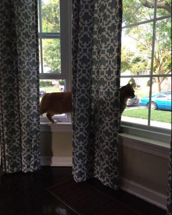 Размер имеет значение: фотоподборка с удивительно длинными кошками