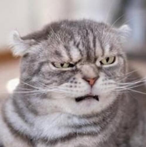 Попробуйте не рассмеяться: такие эмоциональные кошки. Фотоподборка.