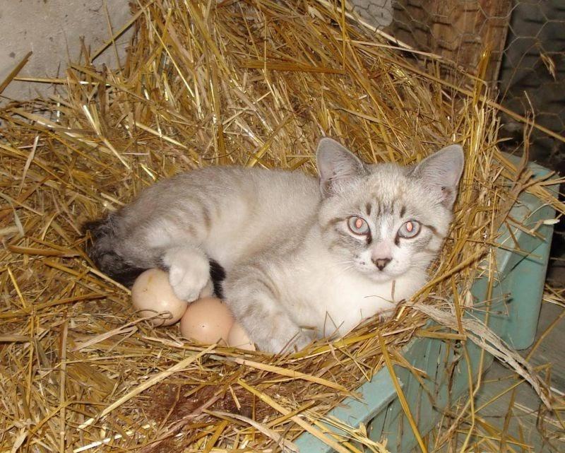 Коты прилетели: смешная фотоподборка с кошками, которые явно что-то перепутали