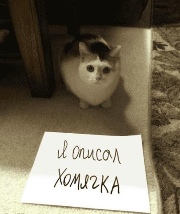 «Казнить нельзя помиловать»: где поставить запятую? Фотоподборка очень и очень виноватых котиков, которым выдвинули серьезные обвинения