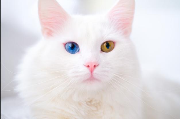 Какого цвета белый Мурчик