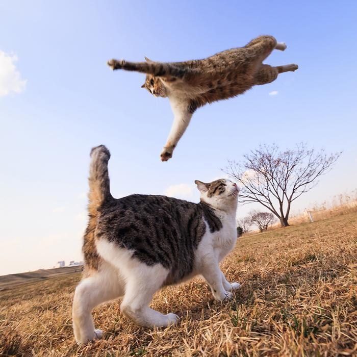 Jumping-Cats-4.jpg