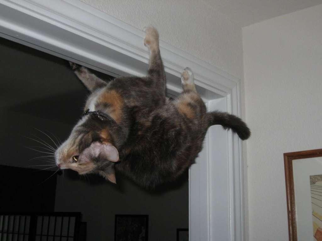 20 котов, которые не в ладах с психикой