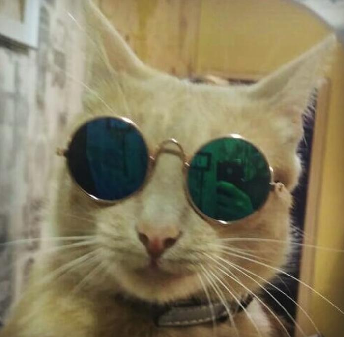 Шикарные котэ в солнцезащитных очках: а нам, крутым, и днем и ночью солнце светит! Фотоподборка
