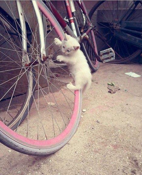 Фото котов, которые ездят на велосипеде | Обозреватель